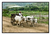 4th year Pic 164 - June - 28 2012