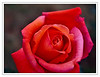 4th year Pic 097 - Mar 06 2012