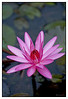 4th year Pic 056 - Jan 09 2012