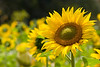 Soaking it in.
