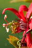365