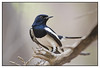 3rd year Pic 313 - Aug 26 2011