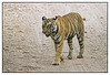 3rd year Pic 323 - Sep 05 2011
