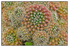 3rd year Pic 220 - May 05 2011