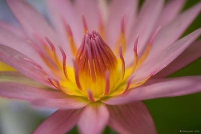 Water Lily Shot at Ahmedabad while testing a Nikorr 105 macro lens.